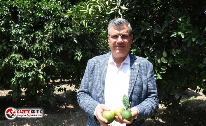 """CHP'li Barut: """"Aşırı sıcak ve poyraz da sigorta kapsamına alınsın"""""""