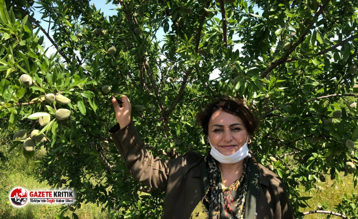 "CHP'li Şevkin:""Tarım Bakanlığı, badem..."