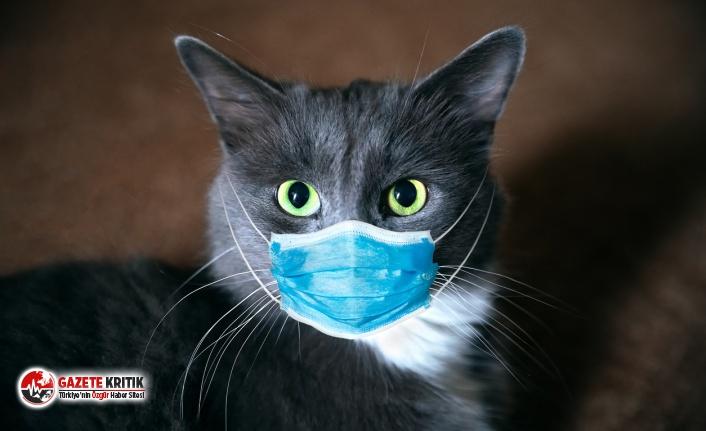 Kedide koronavirüs tespit edildi