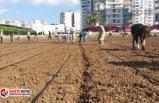 Başkan Tarhan'dan kent içi tarım hamlesi!