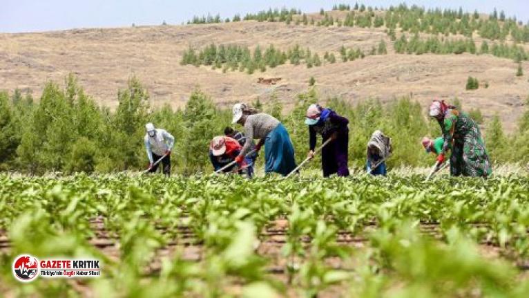 'Borcun var' diyerek çiftçinin desteğine el koydular