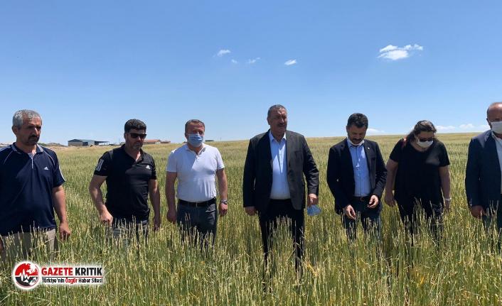 """CHP'li Gürer: """"Çiftçi dolunun vurduğu arpa   ve buğdayı biçip hayvan yemi yapıyor"""""""