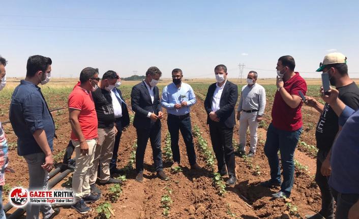 CHP'li Tutdere: Çiftçilere zulmediyorlar!