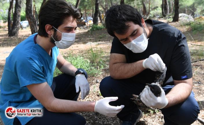 Konyaaltı Belediyesi'nden yaralı kargaya yardım eli