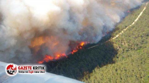 Gelibolu'da orman yangını! Şimdiden 300 hektar...