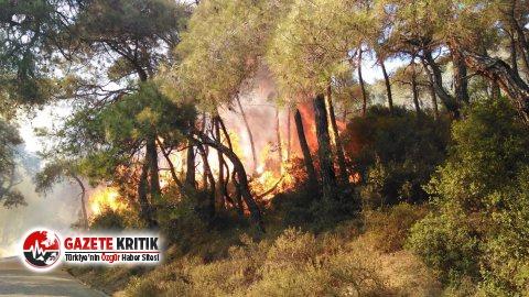 İBB'den Heybeliada'daki yangına çok sayıda helikopter ve araçla müdahale!