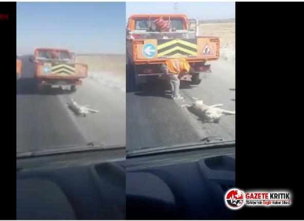 Konya'da resmi araçla köpeğe 'işkence'...