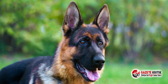 Korona testi pozitif çıkan köpek hayatını kaybetti