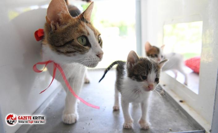 Lohusa dönemindeki kedilere özel ilgi