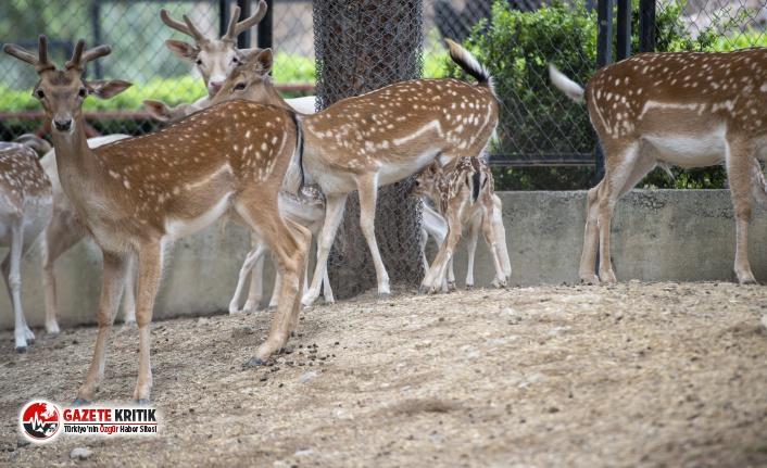 Tarsus Doğa Parkı'nda Yeni Normale Uygun Tedbirler...