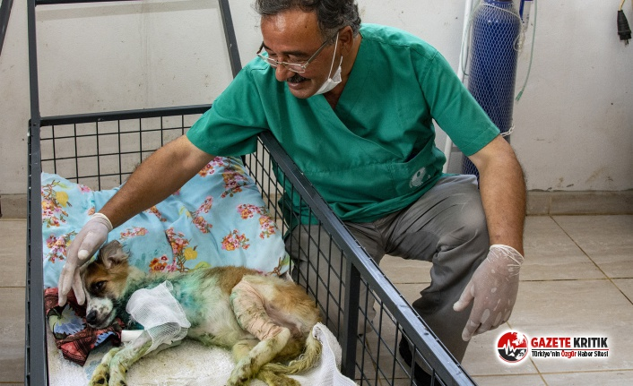 Büyükşehir'e Son 7 Ayda 1580 Kedi ve Köpek Yaralanma İhbarı Ulaştı