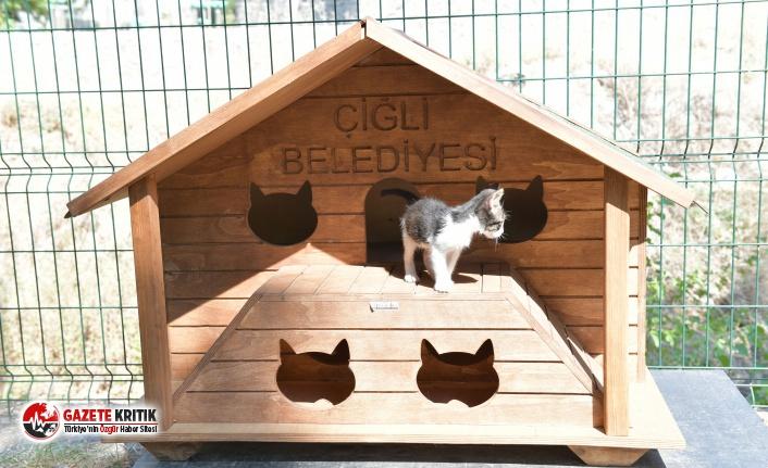 Çiğli'de sokak kedileri yeni evlerine kavuştu