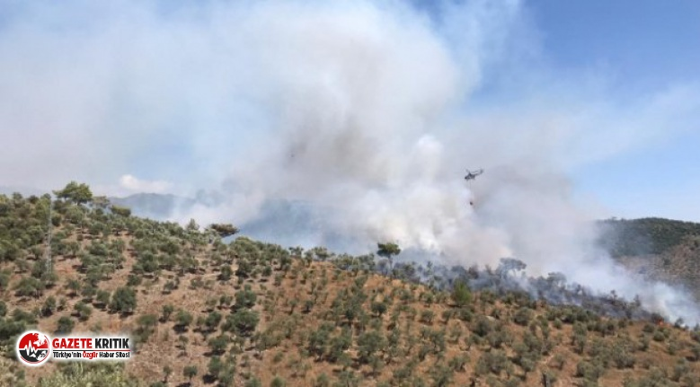 Muğla'da zeytinlik alanda çıkan yangın ormana sıçradı