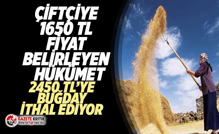 Türkiye'de çiftçiye 1650 TL  taban fiyat veren iktidar ithal buğdayı 2450 TL'ye getiriyor!