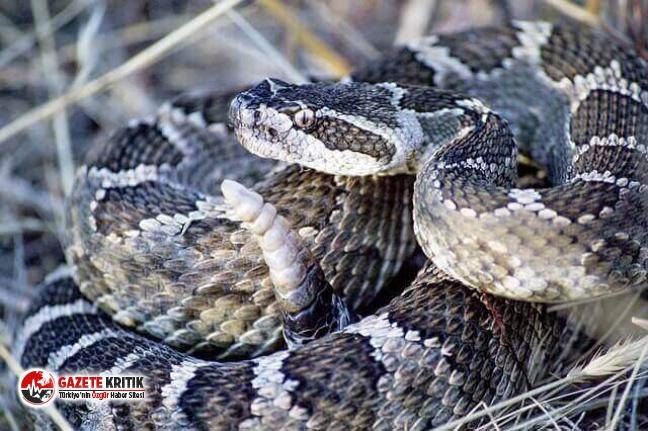 6 aydır boş duran ofisi çıngıraklı yılanlar bastı