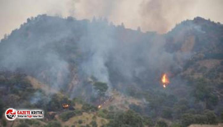 Aydın'da zeytinlik alanda yangın