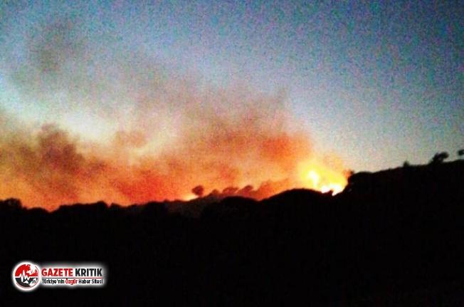 Çine'de orman yangını!