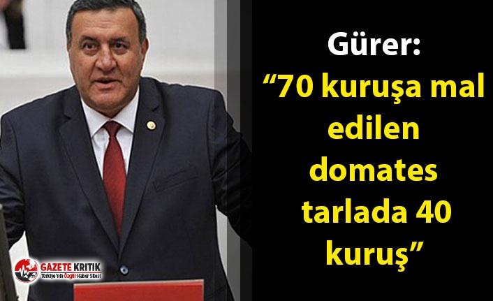 """Gürer: """"70 kuruşa mal edilen domates tarlada 40..."""