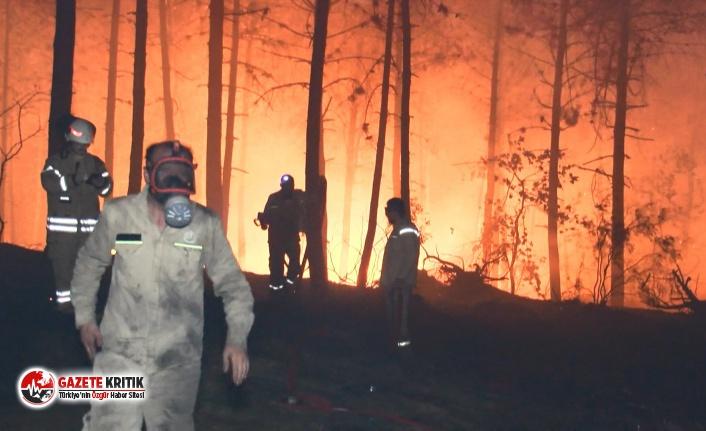 İstanbul, Pendik'te orman yangını; alevler...