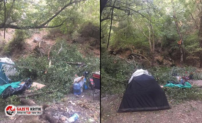 Kampçıların üzerine ağaç devrildi: Biri ağır,...