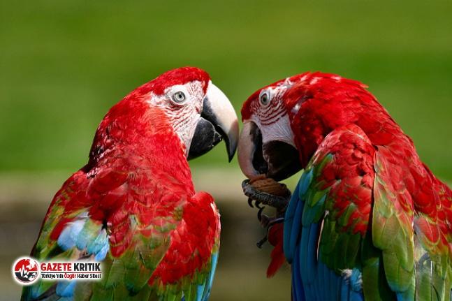 """Aynı anda küfürleşen beş papağan, """"birbirlerini..."""