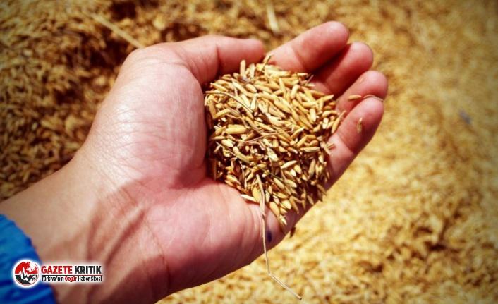 Buğday, arpa, mısır ithalatında gümrük vergisi sıfırlandı