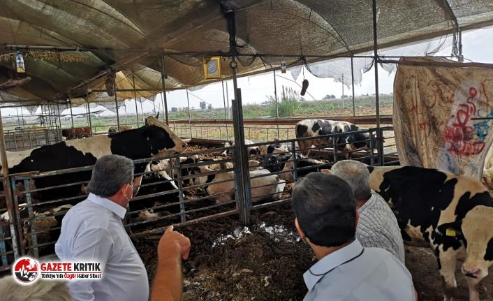 CHP'li Gökçel: İthal edilen hayvanlar yerli hayvanları öldürüyor
