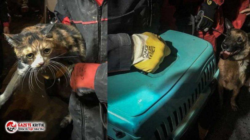 İzmir'de Arama Kurtarma Köpeği Enkazda Kediyi Kurtardı