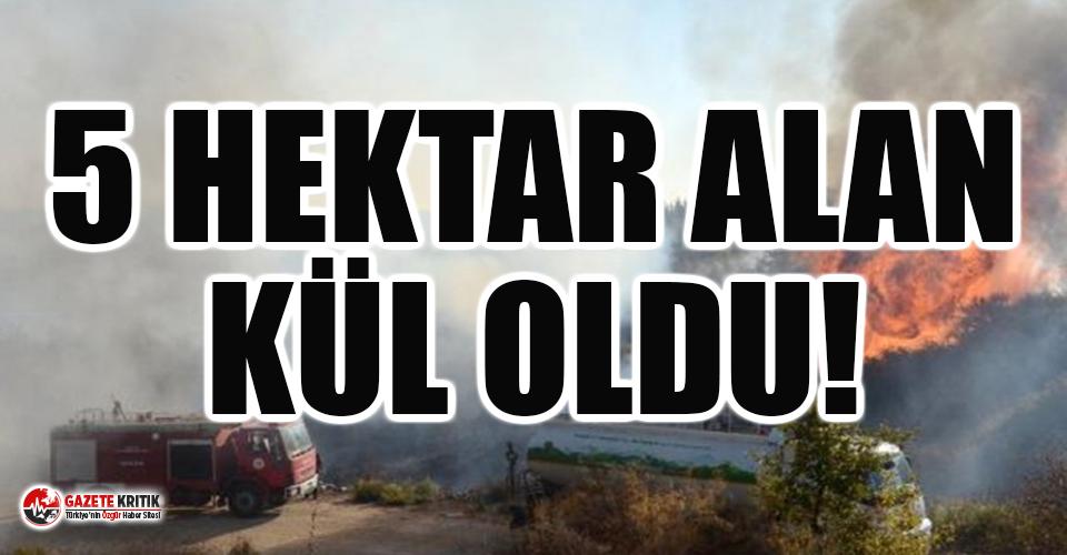 Antalya'da makilik yangını!