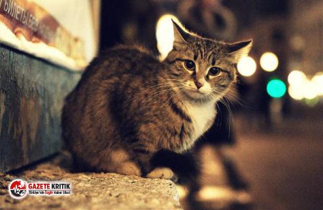İnsanlık dışı haber! Sokak kedilerini kesip yiyen kadın gözaltına alındı