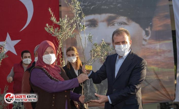 Mersin Büyükşehir'den üreticilere binlerce zeytin fidanı desteği!