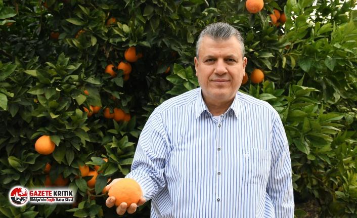 """CHP'li Barut: """"Portakal ihracatını yasaklayan..."""
