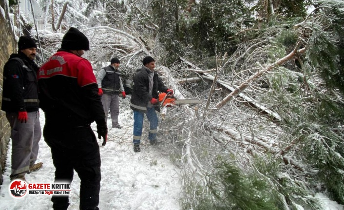Kartal Belediyesi Ekiplerinden Devrilen Ağaca Müdahale