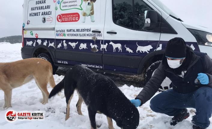 Kartal Belediyesi sokaktaki Canları karlı havada unutmadı!
