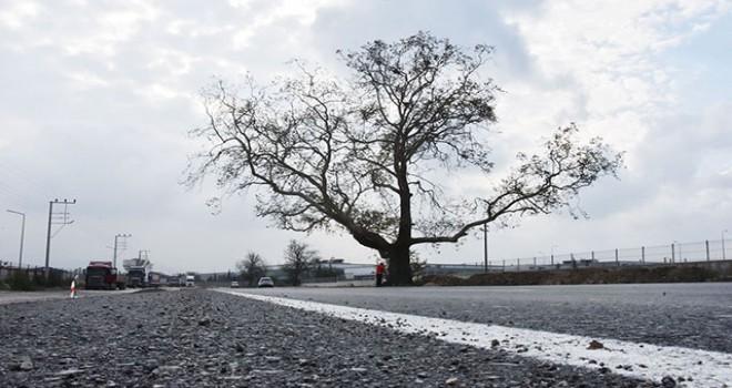 270 yıllık çınar ağacının zarar görmemesi...