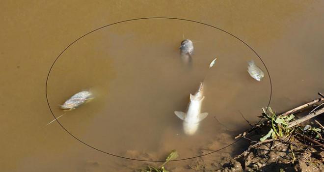 Gediz Nehri'nde toplu balık ölümü