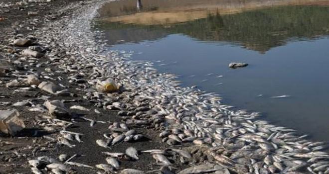 İslahiye'de binlerce balık kıyıya vurdu