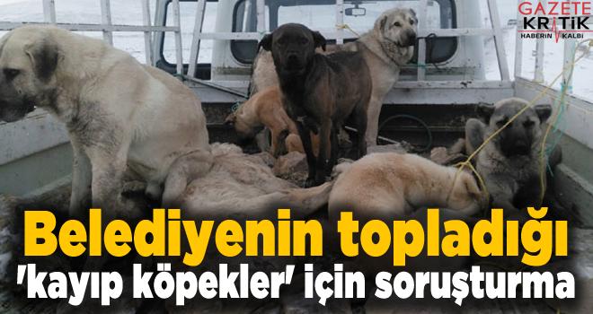 Belediyenin topladığı 'kayıp köpekler' için...