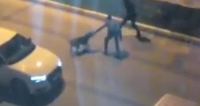 Sokak köpeklerine kemerle işkence uyguladılar