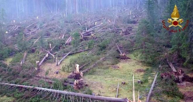 İtalya'da korkunç olay: Yıldırım düştü, ağaçlar...