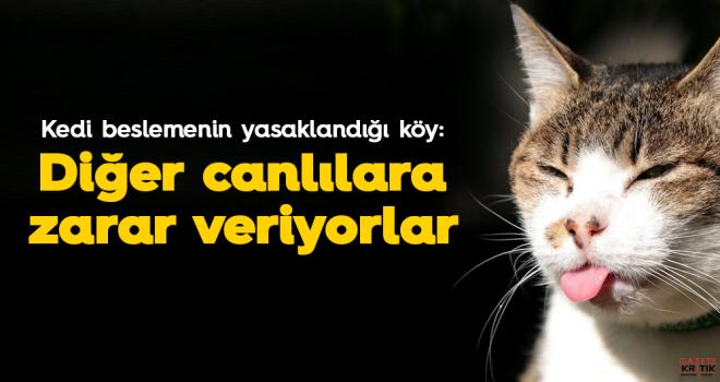 Kedi beslemenin yasaklandığı köy: Diğer canlılara...