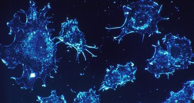 Yerli kanser ilacı çalışmalarında sona gelindi