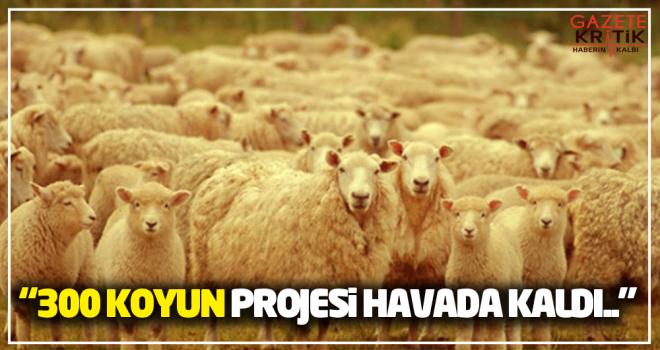 CHP'li Gürer: 300 koyun projesi havada kaldı