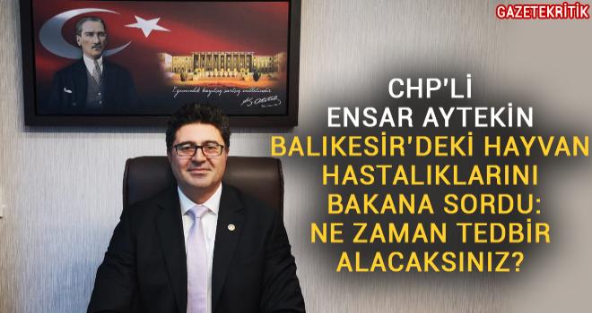 CHP'Lİ ENSAR AYTEKİN BALIKESİR'DEKİ HAYVAN HASTALIKLARINI...