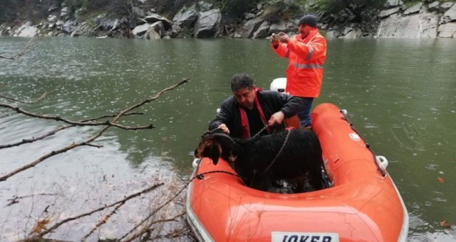 Kayalıklarda mahsur alan keçiler 10 gün sonra kurtarıldı