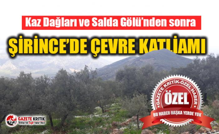 ŞİRİNCE'DE ÇEVRE KATLİAMI