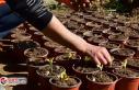 Bornova Belediyesi kendi bitkilerini üretmeye başladı